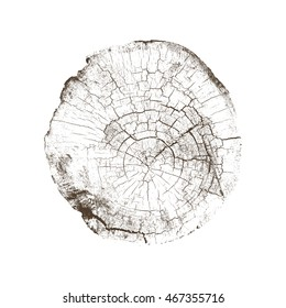 Vector Rough Aged Wood Texture Cross Section Tree Rings Cut Slice Brown Stump Isolated on White Showing Age and Years