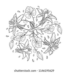 Vector round bouquet with outline Aquilegia or Columbine flower, bud and leaf in black isolated on white background. Composition with contour ornate Aquilegia for summer design or coloring book.