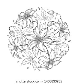 Vector round bouquet with outline Clematis or Traveller's joy ornate flower bunch, bud and leaves in black isolated on white background. Contour climbing liana Clematis for summer coloring book.