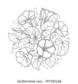 Vector round bouquet with outline Ipomoea or Morning glory flower, leaf and bud in black isolated on white background. Perennial climbing plant in contour style for summer design and coloring book.