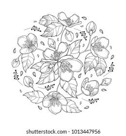 Vector round bouquet with outline Jasmine flower bunch, bud and ornate leaves in black isolated on white background. Floral with Jasmine flower in contour style for spring design or coloring book.