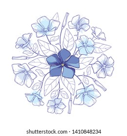 Vector round bouquet of outline pastel blue Periwinkle or Vinca flower bunch and ornate leaves isolated on white background. Contour ornamental groundcover plant Periwinkle for summer decor.