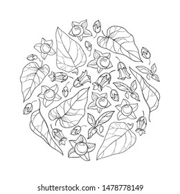 Vector round bunch with outline toxic Atropa belladonna or deadly nightshade flower, bud, berry and leaf in black isolated on white background. Poisonous contour Belladonna plant for coloring book.