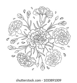 Vector round composition with outline Carnation or Clove. Flower bunch, bud and leaves in black isolated on white background. Ornate contour carnation for spring or summer design, coloring book.