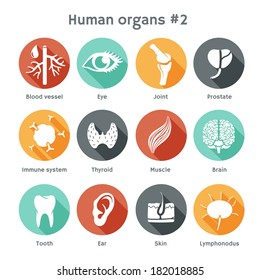 Vector round icons of human organs Flat design