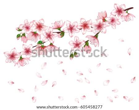 Vector Sakura Japanese Cherry Blossom Tree Stock Vector Royalty