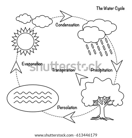 Vector Schematic Representation Water Cycle Nature Stock Vector ...