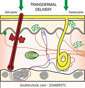 Vector scheme illustration of transdermal drugs delivery. Enhancement of Skin Penetration