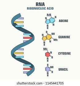 Vector scientific icon spiral RNA. Illustration of the structure of the RNA molecule.