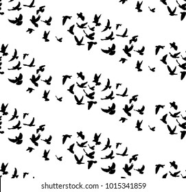 vector, seamless background with a pattern of flying birds on a white background