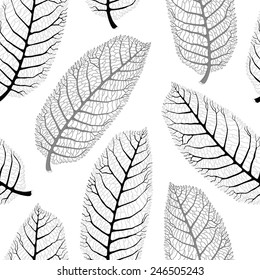 Vector seamless black and white pattern with  lace walnut leaves on white background
