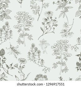 Vector seamless healthy herbs background . Ink drawn botanical engraved illustration in vintage style for print, wrapping, paper, textile and other natural seamless design.