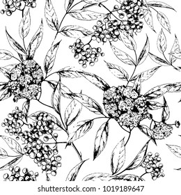 Vector seamless herbal background with Elder flower. Hand drawn botanical illustration for print, wrapping, fabric and other seamless design in sketch style. Black and white.