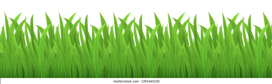 Vector seamless image of green grass isolated on white. EPS 10.