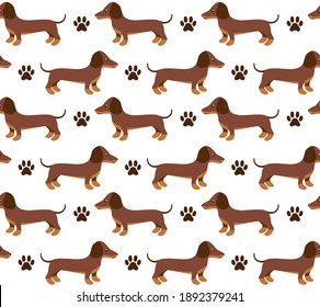 Vector seamless pattern in dachshund for print and web design on white background