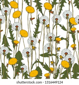 Vector seamless pattern - Dandelion botanical isolated illustration. Plant, flowers, leaves, hand drawn set