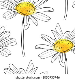vector seamless pattern with drawing daisy flower, floral background, hand drawn botanical illustration
