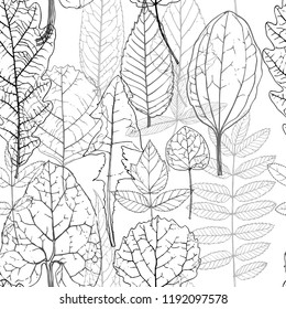 vector seamless pattern with drawing leaves of wild plants and trees, botanical illustration, hand drawn floral background