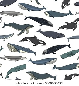 Vector seamless pattern with hand drawn whales. Beautiful ink drawing, heavy contour. Perfect design elements, marine animal illustration