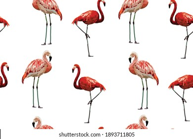 Vector seamless pattern with hand drawn flamingo birds in art markers style