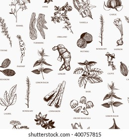 Vector seamless pattern with hand drawn spices and herb sketch. Vintage ingredients background for your menu or kitchen design