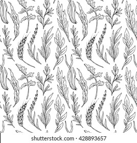 Vector seamless pattern with hand drawn herbs isolate on white background