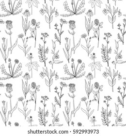 vector seamless pattern with hand drawn medical herbs, line drawing plants, vintage floral ornament