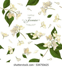 Vector seamless pattern with jasmine flowers on white. Design for herbal tea, health care products, natural cosmetics, essential oil. Can be used as wedding background. Best for wrapping paper.