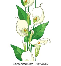 Vector seamless pattern with outline Calla lily flower or Zantedeschia. Pastel flower, bud and green leaves on the white background. Floral pattern in contour style with calla for summer design.