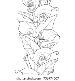 Vector seamless pattern with outline Calla lily flower or Zantedeschia. Flower, bud and leaves in black on the white background. Floral pattern in contour style for summer design and coloring book.