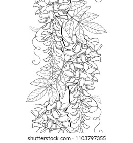 Vector seamless pattern with outline Wisteria or Wistaria flower bunch, bud and leaf in black on the white background. Floral border with blooming contour Wisteria for summer design or coloring book.