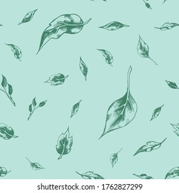 Vector seamless pattern with several sprigs of tea tree on a mint pastel background. Graphic artwork with imitation of blue ink or pen. Picture for packaging design of cosmetics, medicines, textiles.