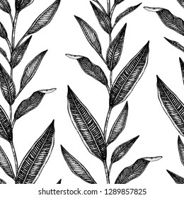 Vector seamless pattern of tropical leaves isolated on white background. Hand drawn natural background. Black and white graphic tropical design. Line shading style