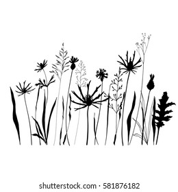 Vector seamless pattern with wild meadow flowers, herbs and grasses. Thin delicate line silhouettes of different plants - johnson's grass, cornflowers, thistles. Isolated on white background