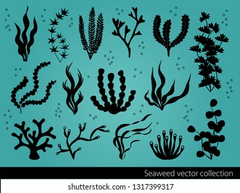 Vector seaweed icons collection