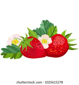 Vector separated illustration of strawberries and leaves.