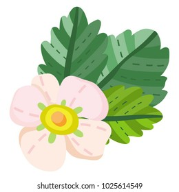Vector separated illustration of strawberry  leaves and flower.