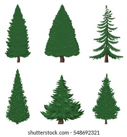 Vector Set of 6 Cartoon Pine Trees on White Background
