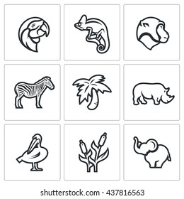 Vector Set of Africa Animals Icons. Parrot, Chameleon, Monkey, Zebra, Palm, Rhinoceros, Pelican, Reed, Elephant. Flora and fauna of the African country