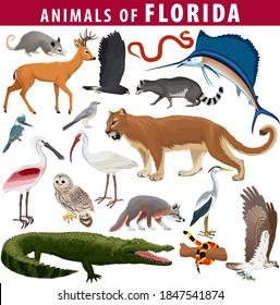 vector set - animals of Florida: barred owl, key deer, osprey, snail kite, opossum, coral snake, Everglades rat snake, Puma Cougar, racoon, grey fox, spoonbill, Mockingbird, ibis, heron and sailfish