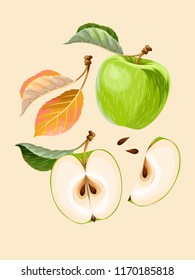 Vector set of apple fruits and leaves