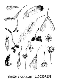 Vector set of autumn seeds and feathers