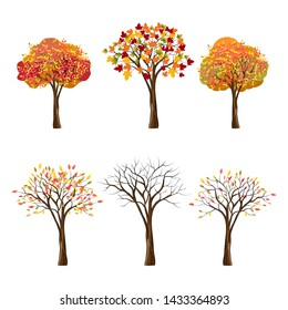 Vector set of autumn trees isolated on white background, Collection of Autumn cartoon trees in red, orange, yellow leaves on branches, Colorful trees for Fall park or landscape background.