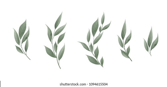 Vector set. Bay leaf. Green leaves on white background. Vector illustration