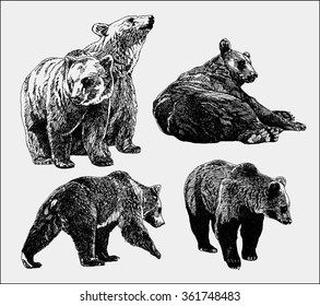 Vector set of bears sketch. Hand Drawing.
