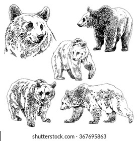 vector set of bears sketch, Hand Drawing. isolated on white background