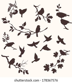 Vector set of birds and twigs.  Decorative silhouette of  birds sitting on tree branches: oak, maple, birch, rowan and others. Flying birds