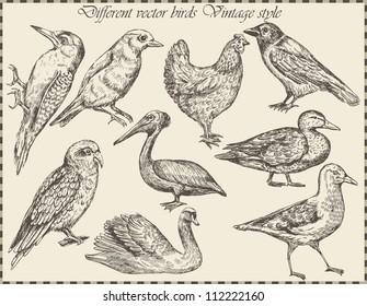 vector set: birds - variety of vintage bird illustrations