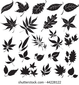 "Vector set of black floral design elements (from my ""Big floral collection"")"