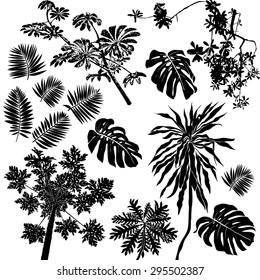 Vector set of black silhouettes of tropical leaves, palms, trees, foliage. Design elements of tropical nature. Stylized images and simple shapes for logos and natural decor
